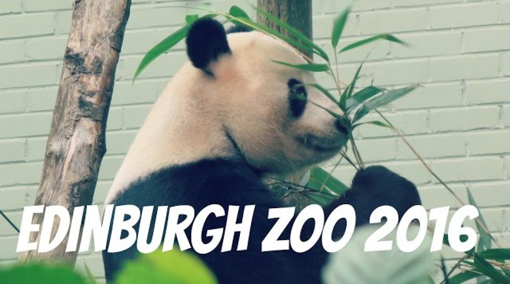 Edinburgh Zoo - Giant Panda, Penguin Parade , Koala and many more