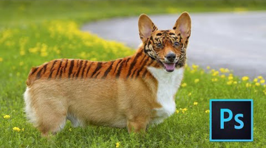สอน Photoshop : Photoshop Tutorial: Transform Animal Skin into Tiger Skin